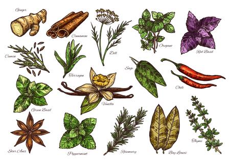 Spezie ed erbe aromatiche disegnano un condimento fresco con i loro nomi corrispondenti Vettoriali
