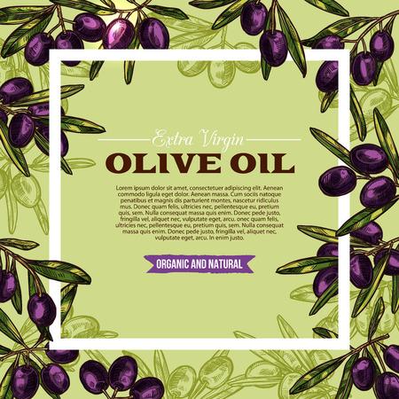 Olive fruit sketch frame of extra virgin oil label
