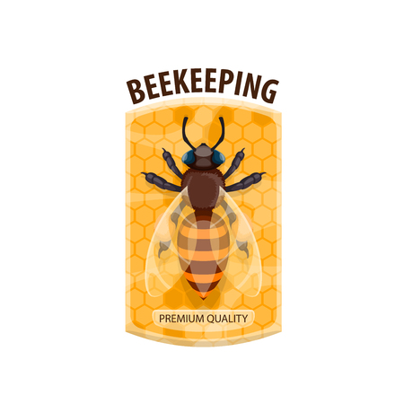 Beekeeping icon with honey bee and honeycomb Vector illustration.