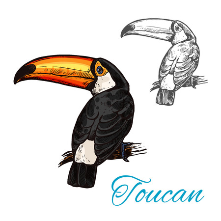 Toucan tropical bird sitting on branch sketch Vector illustration.