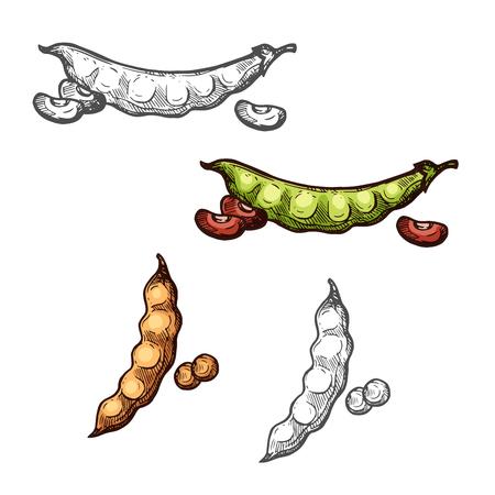 Croquis de légumes de gousse de soja et de haricots des cultures de légumineuses Illustration vectorielle.