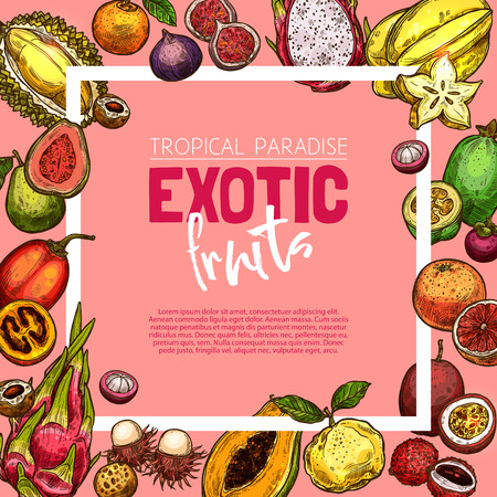 Exotic fruit and tropical berry sketch frame Vector illustration.