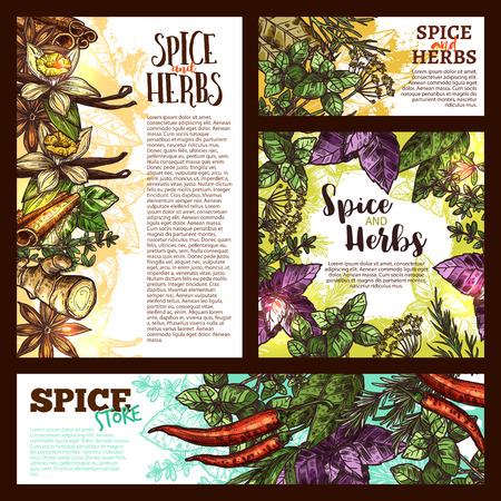 Spice, herb and aromatic vegetable sketch banner Vector illustration.