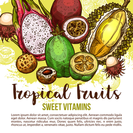 Tropical fruit poster of exotic asian berry sketch Vector illustration.