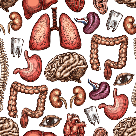 Impression de fond sans couture anatomie avec organe humain et partie du corps. Coeur, cerveau et poumons, rein, foie et yeux, estomac, intestin et colonne vertébrale, croquis de dent et d'oreille pour la conception de toile de fond de thème de médecine