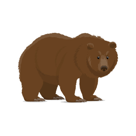 Brown bear animal cartoon icon of wild forest predator. Grizzly bear standing and looking at viewer isolated symbol for hunting sport, zoo mascot and wildlife themes design Illustration