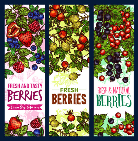 Berry sketch banner of wild and farm fruit. Fresh strawberry, blueberry and raspberry, red and black currant, gooseberry and forest briar green branch with ribbon for natural food, juice label design