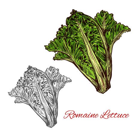Bosquejo de lechuga romana o cos de vegetales de ensalada de hojas. Manojo fresco de planta de lechuga con hojas de color verde oscuro, costillas claras e icono de corazón para agricultura orgánica, vegetariana y diseño de ingredientes de nutrición dietética