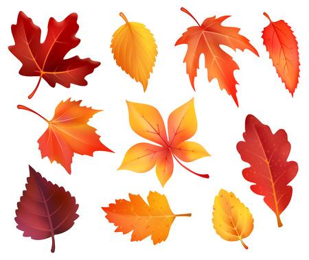 Herbstlaub isolierte Ikonen von Ahorn, Kastanie oder Pappel und Eiche. Vektorsatz fallender Blätter des Waldes von Birken-, Ebereschen- oder Buchen- und Ulmenbaum-Herbstlaub für herbstlichen saisonalen Feiertagsentwurf