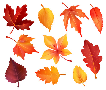Hojas de otoño iconos aislados de arce, castaño o álamo y roble. Vector conjunto de hojas caídas del bosque de abedul, serbal o haya y follaje otoñal de olmo para el diseño de vacaciones de temporada de otoño