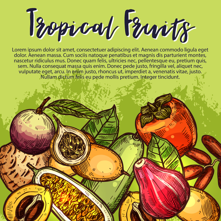 Vector fruits sketch exotic tropical fruit poster