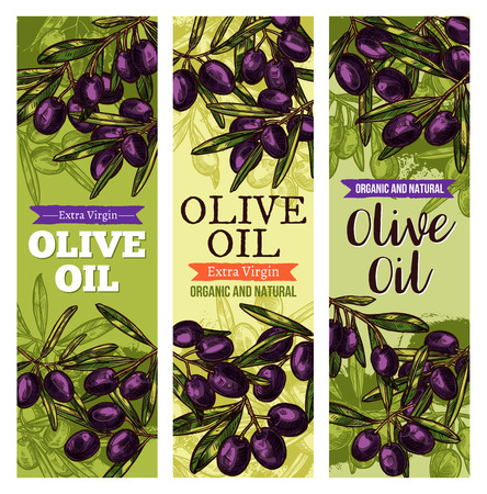 Vector olives bunch sketch banners for olive oil