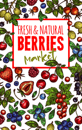 Berries and fresh organic fruits poster design Çizim