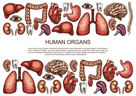 Human organs vector sketch body anatomy poster Stock Illustratie