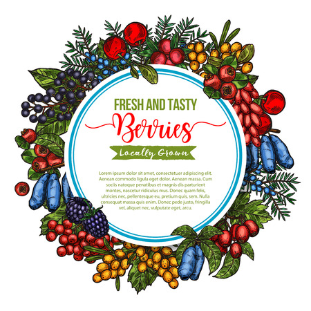 Vector natural fresh tasty berries sketch poster