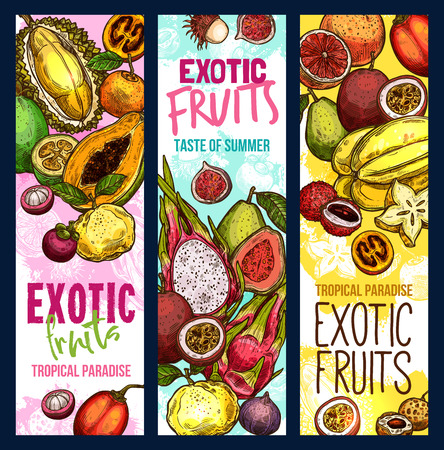 Exotic fruits and tropical fruit harvest banners. Vector sketch design of fresh mangosteen, exotic jackfruit and lychee or mango, dragonfruit pithaya and papaya, rambutan and passion fruits Illustration