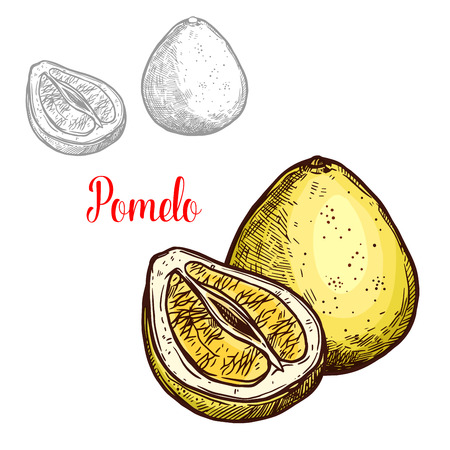 Pomelo fruit sketch isolated icon.