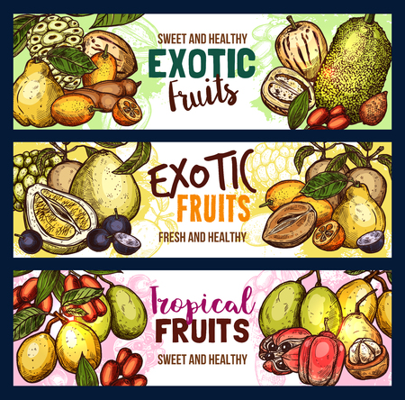 Exotic fruits sketch banners of fresh durian, kuruba or tamarillo and granadilla. Vector design of tropical pitaya dragon fruit or passion fruit and ambarella for exotic fruit farm market