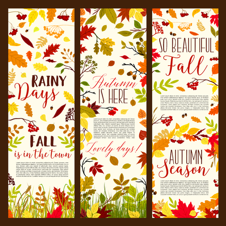 Autumn season banners fall foliage and falling leaves of maple, chestnut or poplar and birch tree. Vector set of rowanberry or rowan leaf and oak acorn pattern on autumn grass background