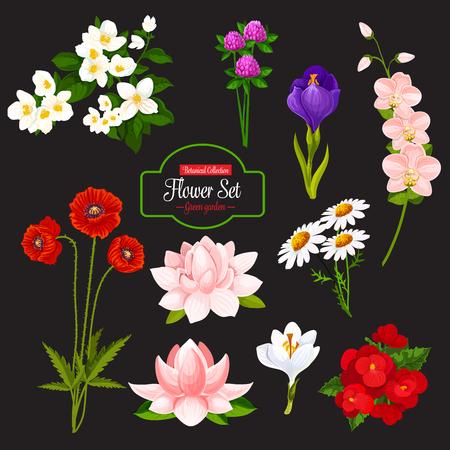 Icono de flor con conjunto de planta de jardín floreciente. Manzanilla, amapola y orquídea, azafrán, jazmín y trébol, begonia y nenúfar, ramo floral de primavera y flor de campo salvaje, hoja verde y rama.