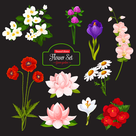 Flower icon with set of blooming garden plant. Chamomile, poppy and orchid, crocus, jasmine and clover, begonia and water lily, floral bunch of spring and wild field flower, green leaf and branch.