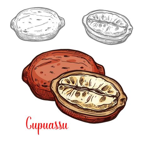 Cupuassu fruit sketch of tropical tree fresh berry