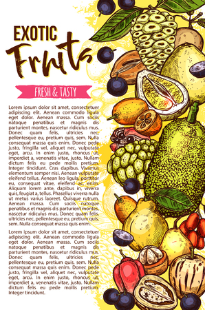 Exotic fruit banner with fresh tropical berry sketch border. Ripe pear, tamarillo and mangosteen, cherimoya, longan and jackfruit, ackee, miracle fruit and jaboticaba for natural fruit juice design Illustration