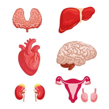 Human organ anatomy cartoon icon set