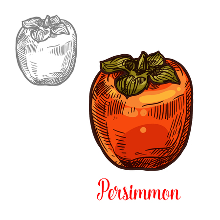 Persimmon fruit isolated sketch of ripe exotic Asian berry. Sweet Japanese persimmon with orange peel and green leaf icon for oriental dessert, natural juice and vegetarian nutrition design.