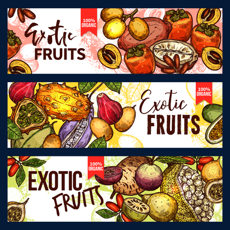 Exotic fruit and tropical berry sketch banner set. Fresh persimmon, kiwano and granadilla, jackfruit, akebia and miracle fruit, marula and cupuassu for exotic fruit dessert or drink menu design.
