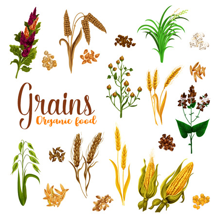 Semilla de grano de cereal con conjunto de icono de oreja de súper alimento orgánico natural.