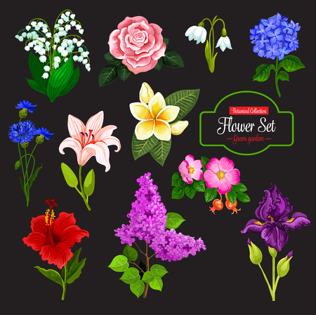 Spring flower cartoon icon set of wild flowering plant and tropical Hawaiian flower. Rose, lily and snowdrop, iris, cornflower and lilac branch, lily of the valley, hydrangea, hibiscus and plumeria.