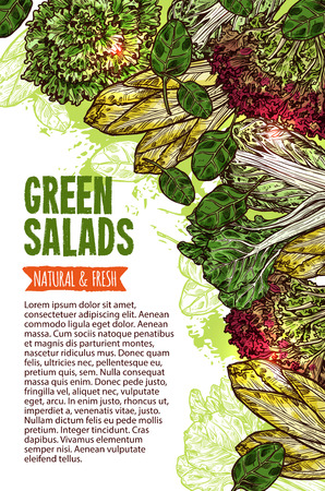Green salad leaf vegetable banner with natural and fresh farm veggies. Lettuce salad, chinese cabbage napa and spinach, bok choy, batavia and chicory sketch border for vegetarian menu card template