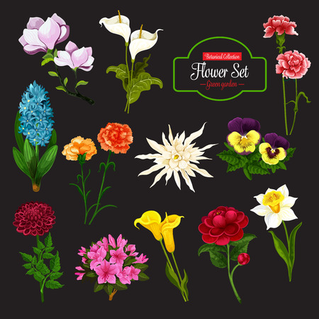 Flower icon of spring flowering plant. Daffodil, calla lily and peony, hyacinth, pansy and phlox, dahlia, aster and magnolia branch with green leaf for floral decoration of greeting card design