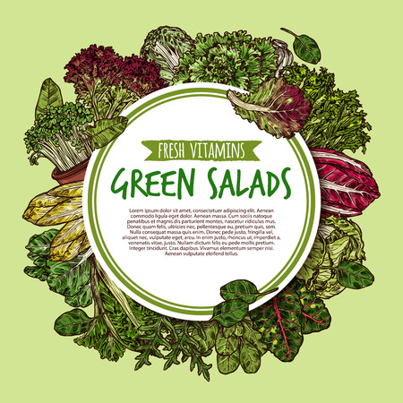 Green salad poster with fresh leaf vegetable. Iceberg lettuce, cabbage and spinach, arugula, celery and sorrel, batavia, watercress and chicory sketch label for farm market food packaging design