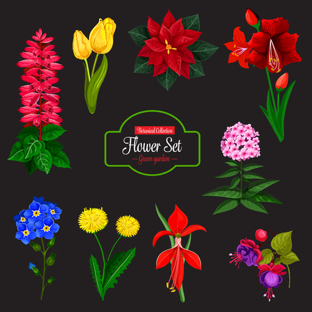 Flower bouquet cartoon icon set. Spring tulip, dandelion and forget-me-not, phlox, delphinium and poinsettia, fuchsia, amaryllis and hippeastrum flowering plant with red, yellow and blue flowers