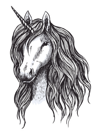 Unicorn horse sketch of magic animal with horn. Head of mythical unicorn or fairy horse with wavy mane. Mythology and fairytale hero for tattoo and t-shirt print design