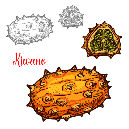 Kiwano melon sketch exotic tropcial vector fruit