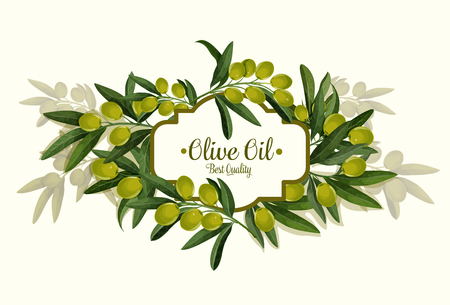 Olive oil best quality vector olives bunch poster