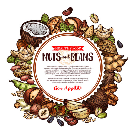 Nuts and beans vector natural sketch poster