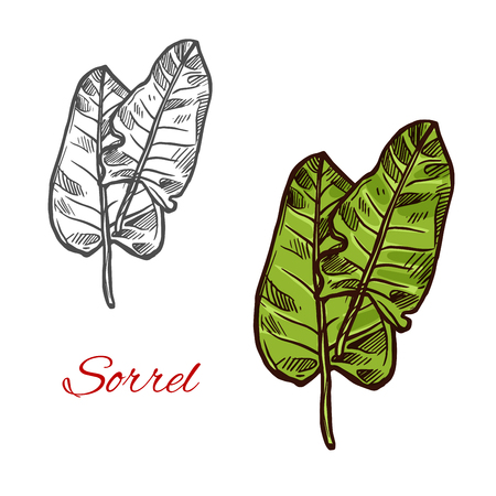 Sorrel salad vector sign Ilustracja