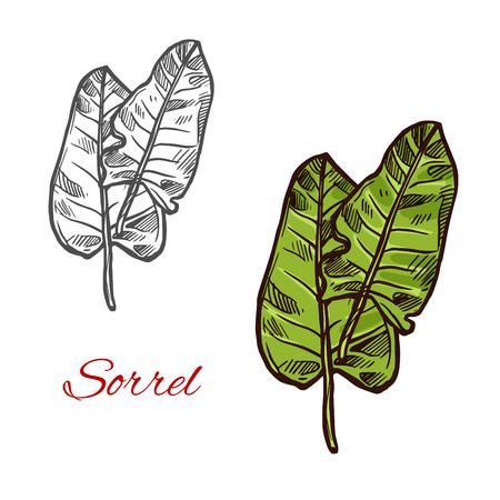 Sorrel salad vector sign Illustration