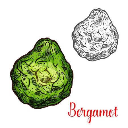 Exotic fruit bergamot vector icon