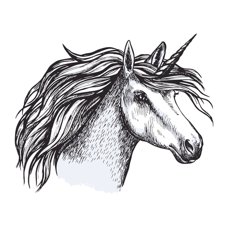 Unicorn horse with horn sketch of magic animal