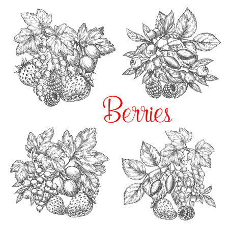 Vector sketch icons of fresh berries and fruits Çizim