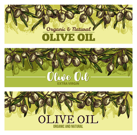 Olive oil banner with border of green fruit sketch Çizim