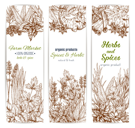 Spices and herbs banners vector sketch