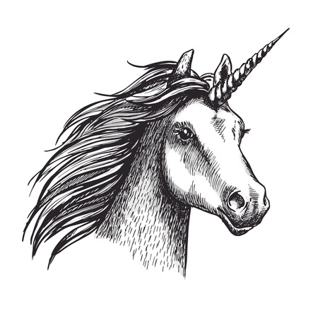 Unicorn vector sketch mystic magic horse