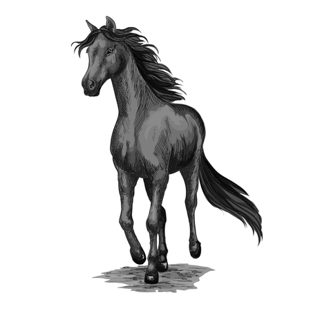 Horse running sketch of galloping black stallion