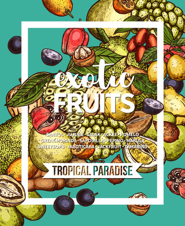 Exotic fruit sketch banner of fresh tropical berry branch and green leaf. Pomelo, marula and jackfruit, tamarind, sweetsop and jaboticaba, ackee, jujube and salak, pepino, morindo and sapodilla